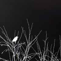 پرنده در شب