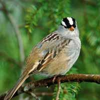 پرنده جنگلی